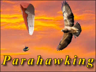 Parahawking - A Relatively Unknown Sport