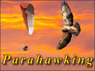 Parahawking