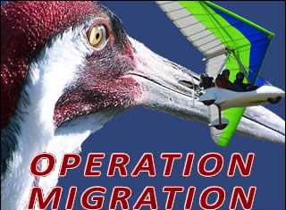 Operation Migrate