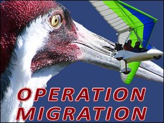 Operation Migragation