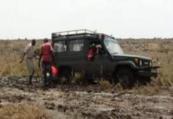 Travel can rough - Save the Rhino