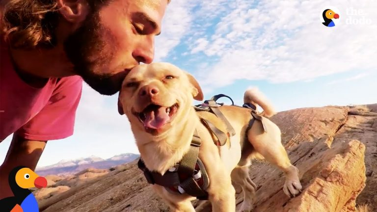 Rescue Dog Jumps Off Cliff